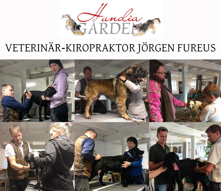 Veterinär-kiropraktor Jörgen Fureus